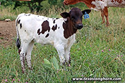 g_6620.jpg - Eliza x Point Mark - 2020 Heifer