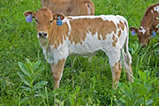 v_2589.jpg - Raffle Drawn x Super Fast - 2009 Bull